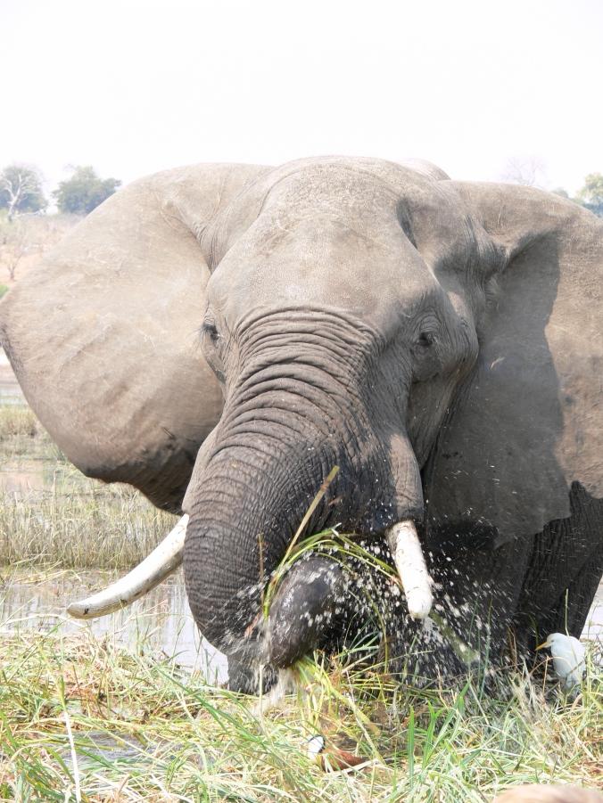 alex n tanya Africa 2011 007