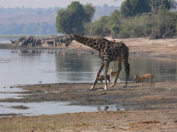 alex n tanya Africa 2011 009